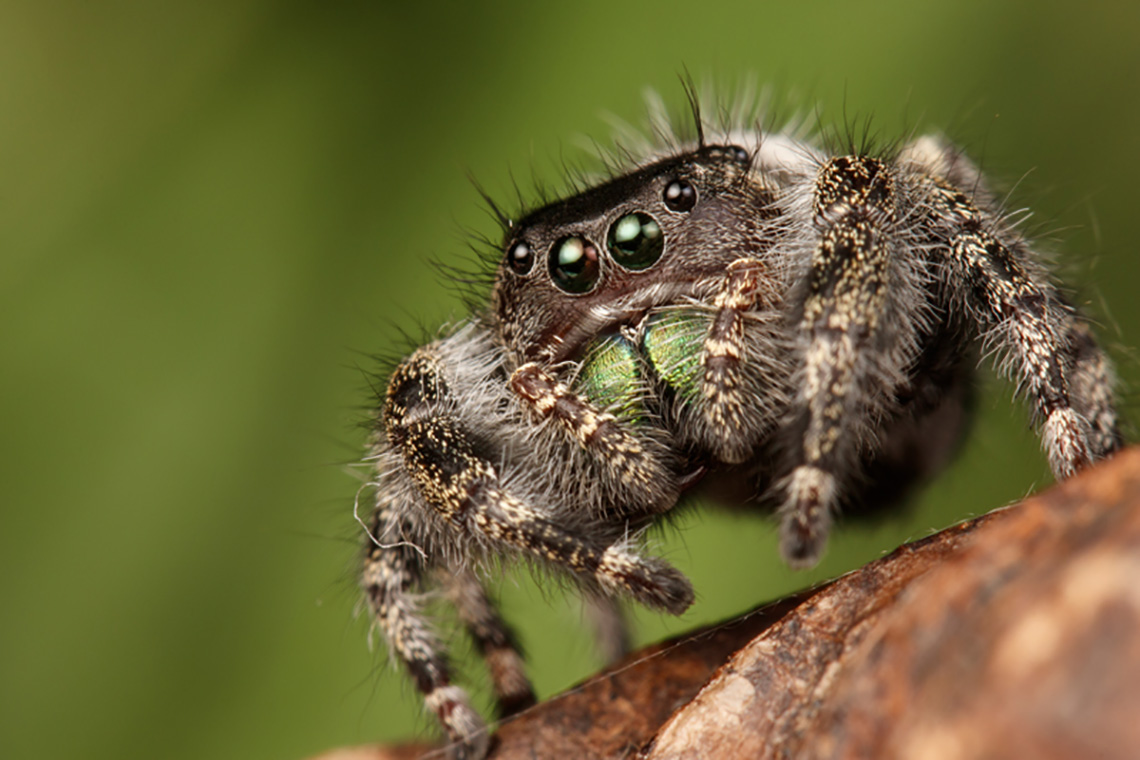 Photo of fuzzy spider