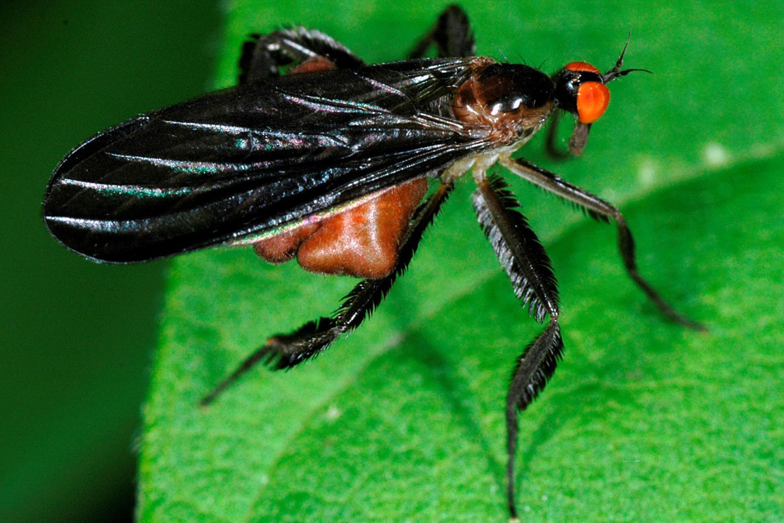 Close-up photo of fly on a leaf
