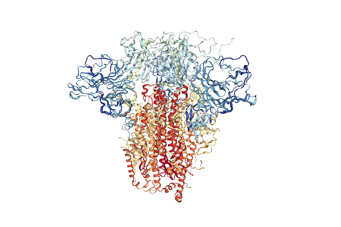 An image of the molecular structure of the novel coronavirus's spike protein pictured here