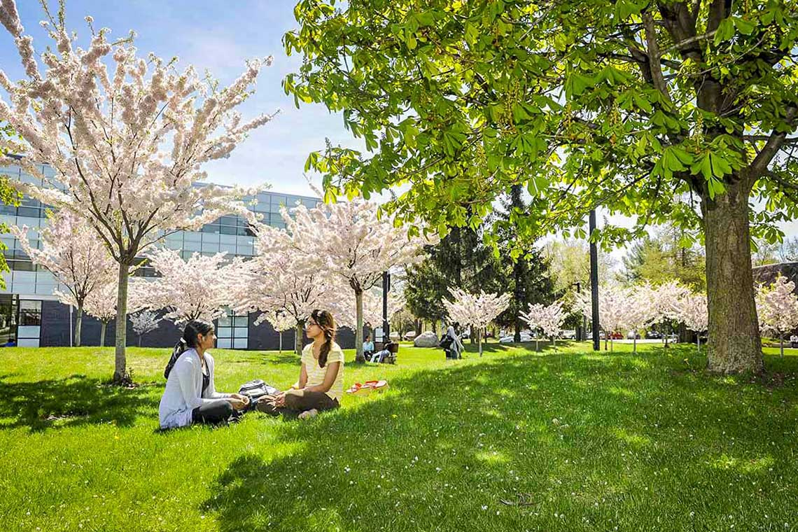 Students sit under trees with cherry blossoms at U of T Scarborough Campus