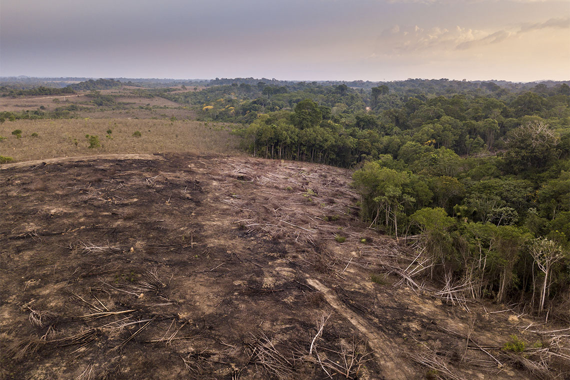 A aerial view of a farm in Brazil that has burned down trees in the rainforest