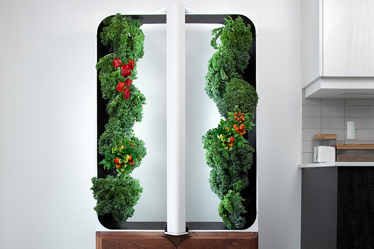 Just Vertical's urban farming framework holds tomatoes, peppers and kale growing in tall rows next to a light column