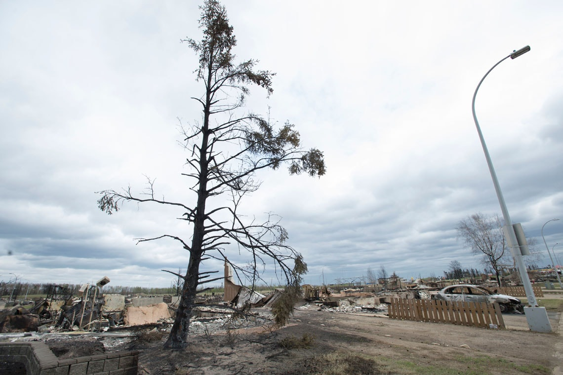 A burnt tree outside Fort McMurray
